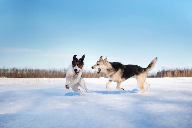 Dos lindos perros peleando y jugando en el campo de invierno en la nieve