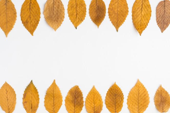 Dos líneas de hojas frágiles