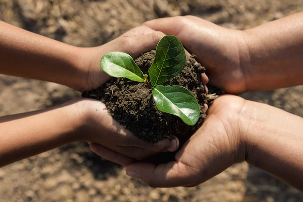 Dos manos ayudando a plantar árboles jóvenes para salvar el mundo.
