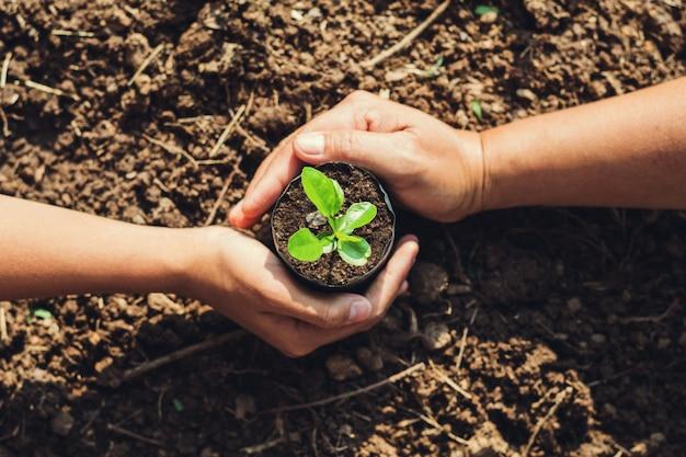 Dos manos plantando árboles en el jardín