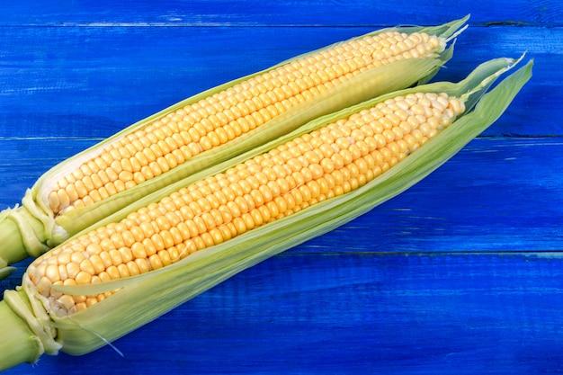 Dos mazorcas de maíz dulce maduro se encuentran en una mesa de madera azul.