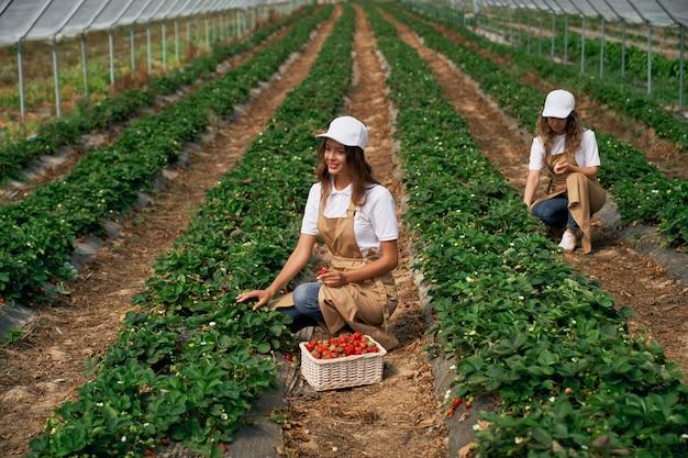 Dos mujeres están trabajando en invernadero.