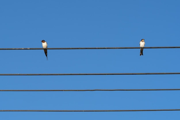 Dos pájaros en cable eléctrico con fondo de cielo azul
