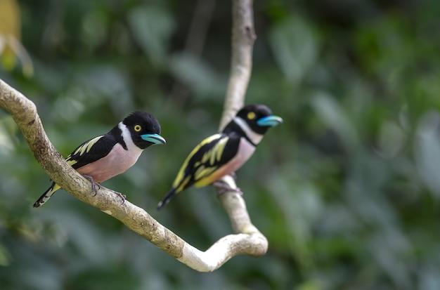 Dos pájaros encantadores