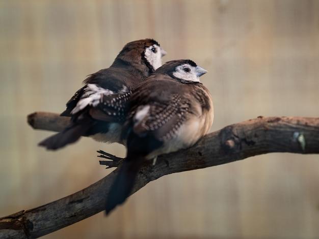 Dos pájaros que se sientan en la rama de árbol. animal, pájaro, amor, concepto de familia.