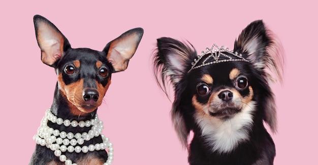 Dos perritos con joyas en la cabeza