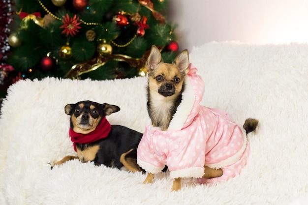 Dos perros graciosos en el árbol de año nuevo
