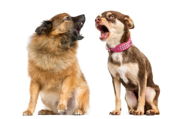 Dos perros gritándose el uno al otro.