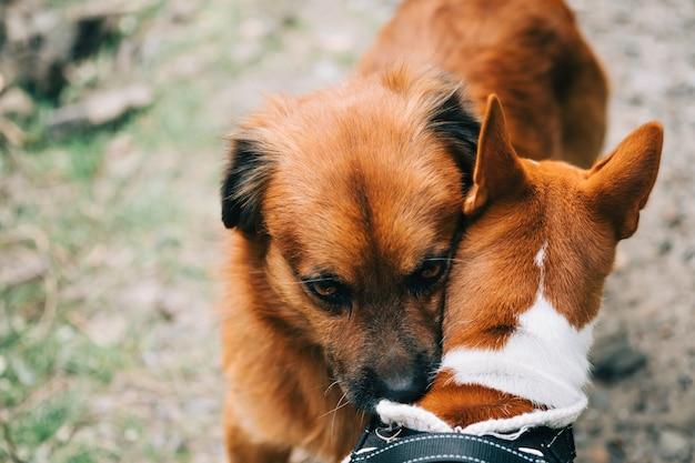 Dos perros mejores amigos se apiñan.