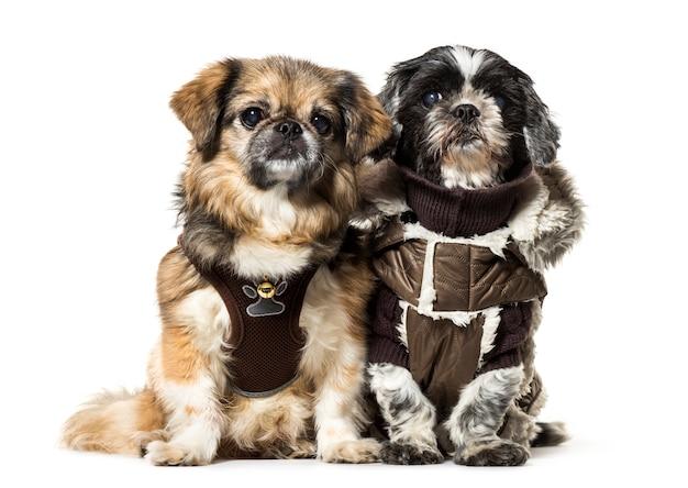 Dos perros sentados en una fila.