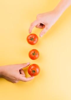 Dos personas recogiendo jugosos tomates rojos sobre fondo amarillo