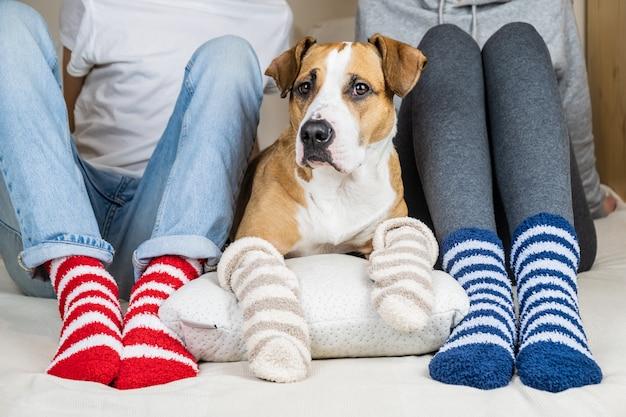 Dos personas y su perro en coloridos calcetines sentados en la cama en el dormitorio. staffordshire terrier y propietarios en la cama con calcetines de colores similares, concepto de un perro como miembro de la familia