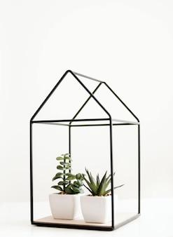 Dos plantas de interior con macetas de cerámica blanca en un adorno en forma de casa aislado en un blanco