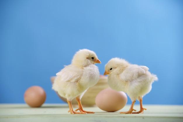 Dos pollitos, huevos y bol.