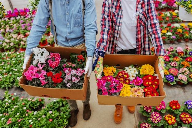 Dos propietarios de pequeñas empresas caminando en invernadero y llevando cajas con flores de colores