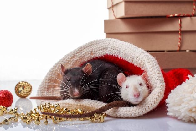 Dos ratas blancas y negras con sombrero de navidad en blanco