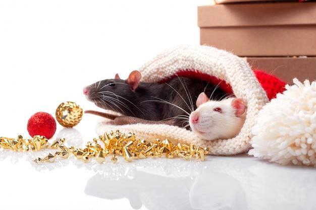 Dos ratas con decoraciones de año nuevo aisladas.