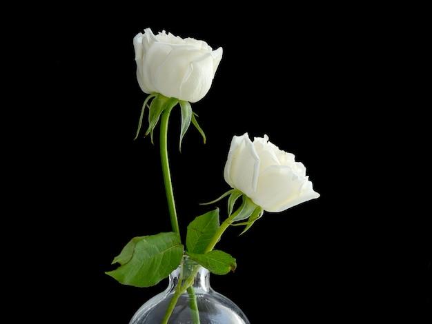Dos rosas blancas para amante.