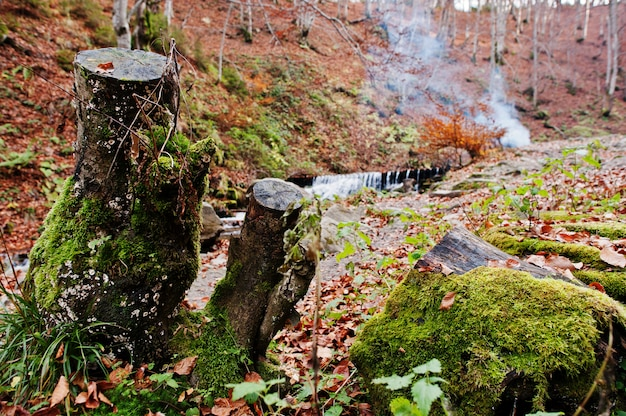 Dos tocones con musgo en otoño bosque fondo río y humo de fuego.