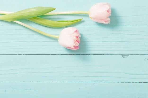 Dos tulipanes sobre fondo de madera azul menta