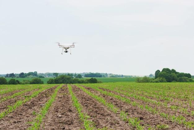 Drone quad helicóptero con cámara digital de alta resolución en campo de maíz verde