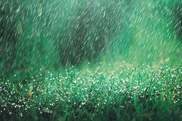 Ducha de lluvia pesada en fondo del prado con la chispa y el bokeh. lloviendo en la naturaleza.
