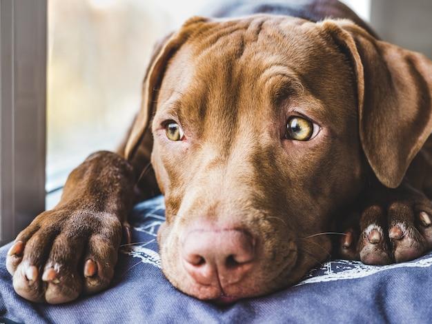 Dulce cachorro durmiendo en una suave tela escocesa