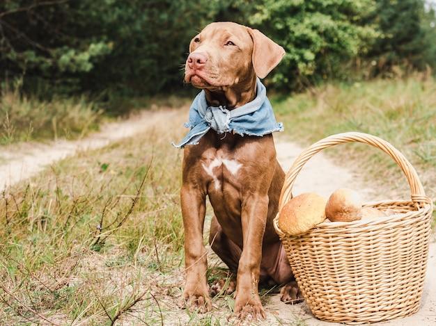 Dulce cachorro en un hermoso bosque tranquilo