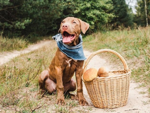 Dulce cachorro en un hermoso bosque