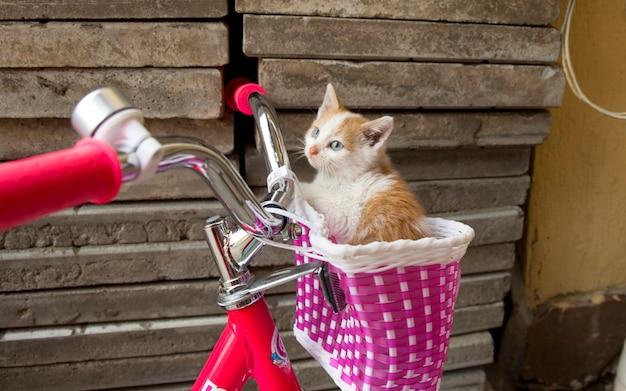 Dulce gatito en la cesta de la bicicleta