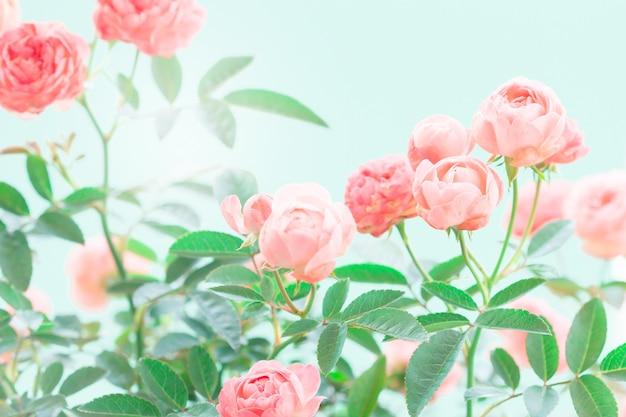 Las dulces flores rosadas para el fondo de amor romance