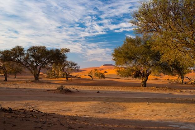 Dunas de arena en el desierto de namib al amanecer, namib naukluft national park, destino de viaje en namibia, áfrica
