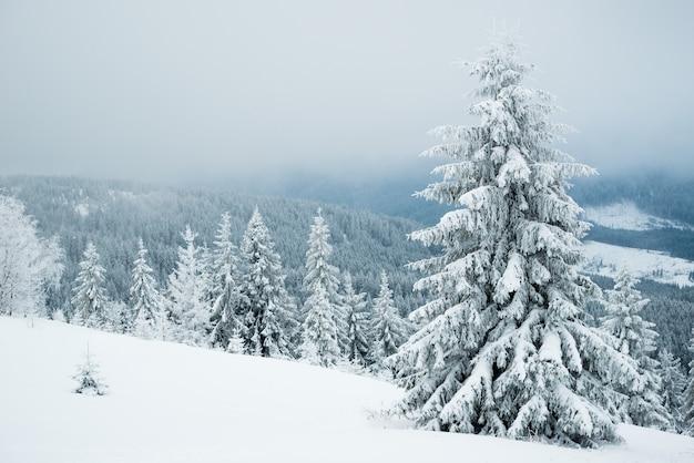 Duro paisaje invernal hermosos abetos nevados contra una zona montañosa con niebla en un frío día de invierno