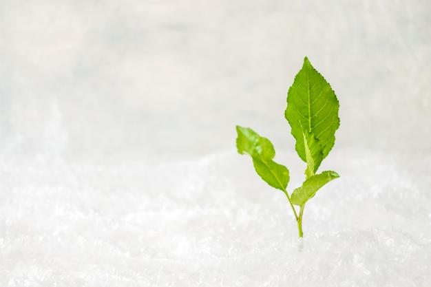 Ecología, concepto de contaminación ambiental. planta verde en plástico de burbujas