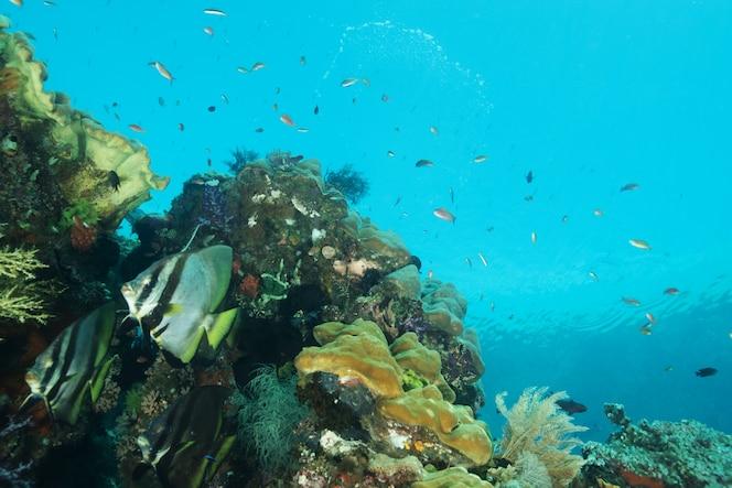 Ecosistema de peces tropicales
