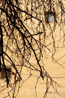 Edificio de hormigón desenfocado con ramas de árbol vacías