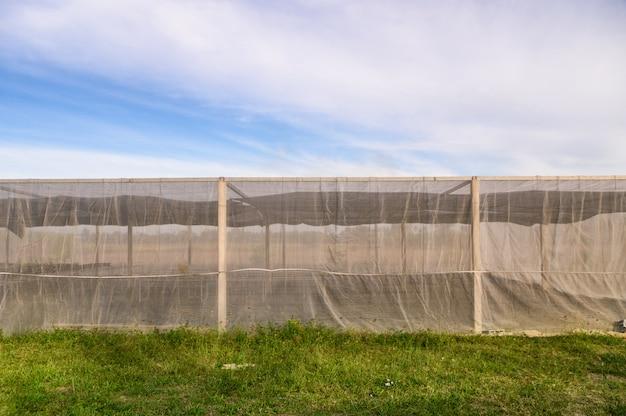 Edificio de invernaderos para hortalizas cultivadas con cielo azul.