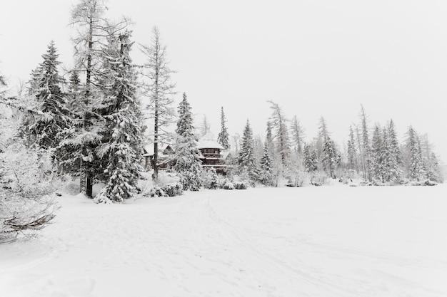 Edificio de madera en el bosque de invierno frío