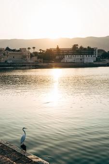 Egret pájaro en el lago pushkar en rajasthan, india