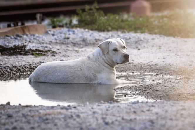 El perro está empapado en agua debido al clima cálido.