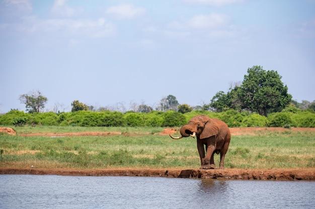 Un elefante en el abrevadero de la sabana de kenia