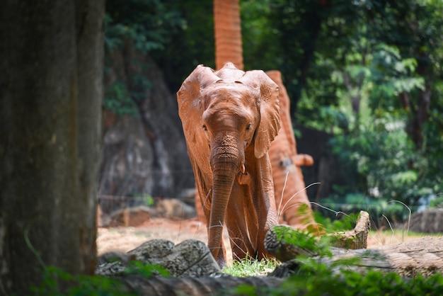 Elefante joven en el parque nacional - áfrica elefante con barro en la piel