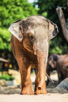 Elefante pequeño con manchas de barro