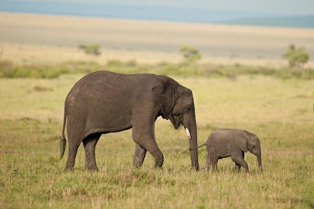 Elefante y su ternero en la sabana