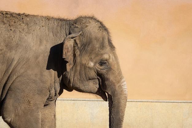 Elefante en el zoo