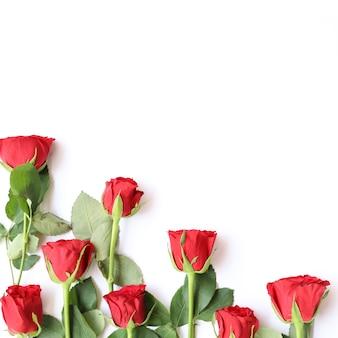 Elegante fondo floral multiusos de rosa roja