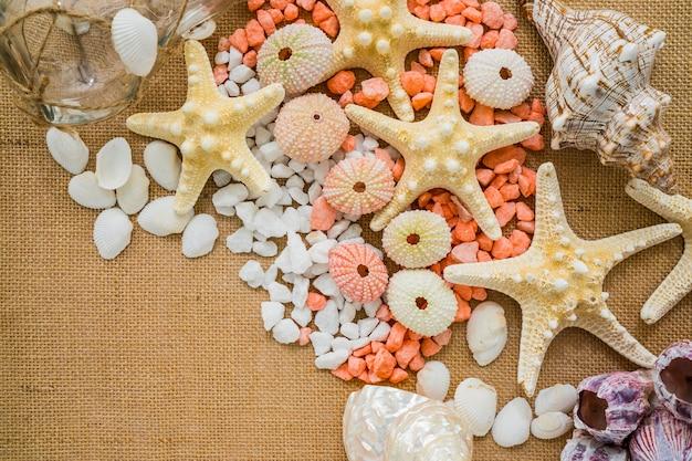 Elementos marinos sobre superficie de lona
