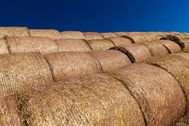 Empaquetado en mallas de nailon paja de trigo después de la cosecha, cielo azul, época de verano del año