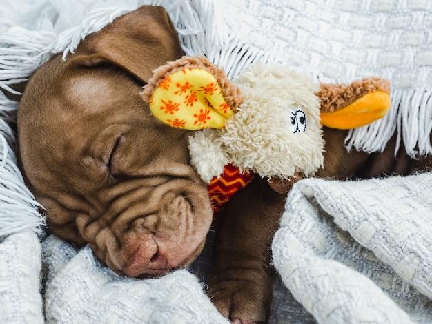 Encantador cachorro, acostado sobre una tela escocesa blanca