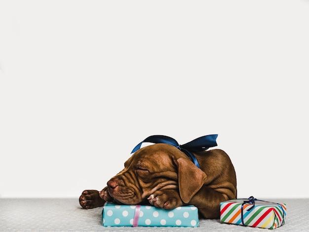 Encantador cachorro y una caja festiva